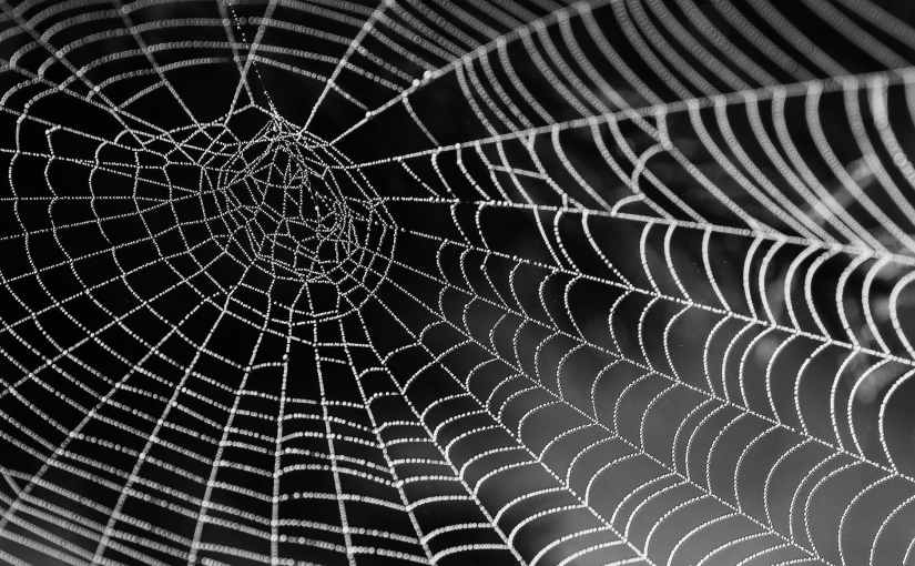 Being Like a Spider: Living Out Our FullestPotential